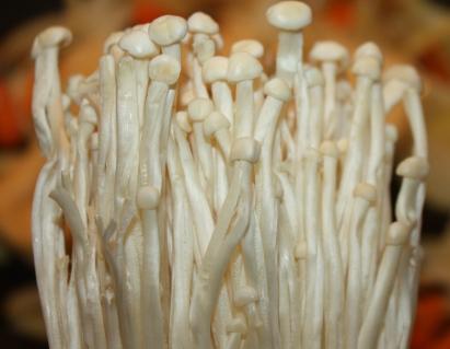 champignons enoki